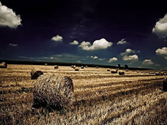 Bujqësia
