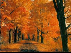 Vjeshta Poezi http://shqiperia.com/lajme/lajm/nr/12115/Vjeshta-si-te