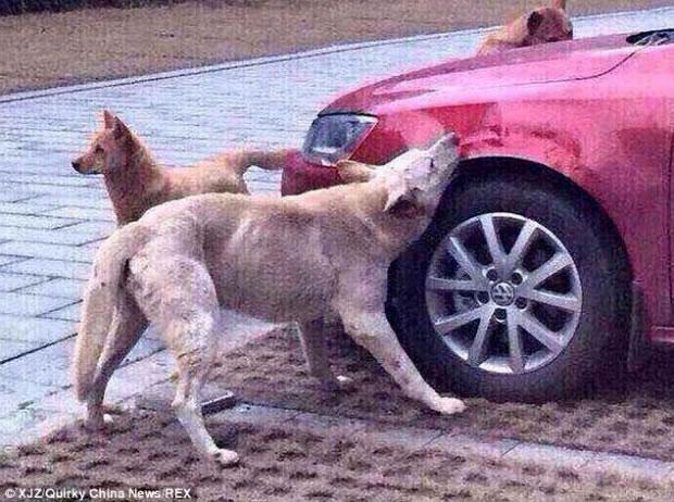 Burri e rreh, qeni kthehet bashke me 'shoket' dhe i shkaterron makinen