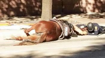 Fotoja qe xhiron ne bote, polici i qendron prane kalit qe jep shpirt
