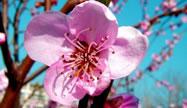 Stina e pranverës sjell 25 koncerte në Akademinë e Arteve