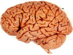 Tumori ne tru vazhdim i tumoreve nga organet jashte kokes