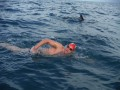 Delfinet mbrojne notarin nga sulmi i peshkaqenit